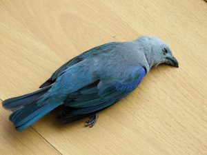 L'oiseau Twitter mourra-t-il de sa belle mort?